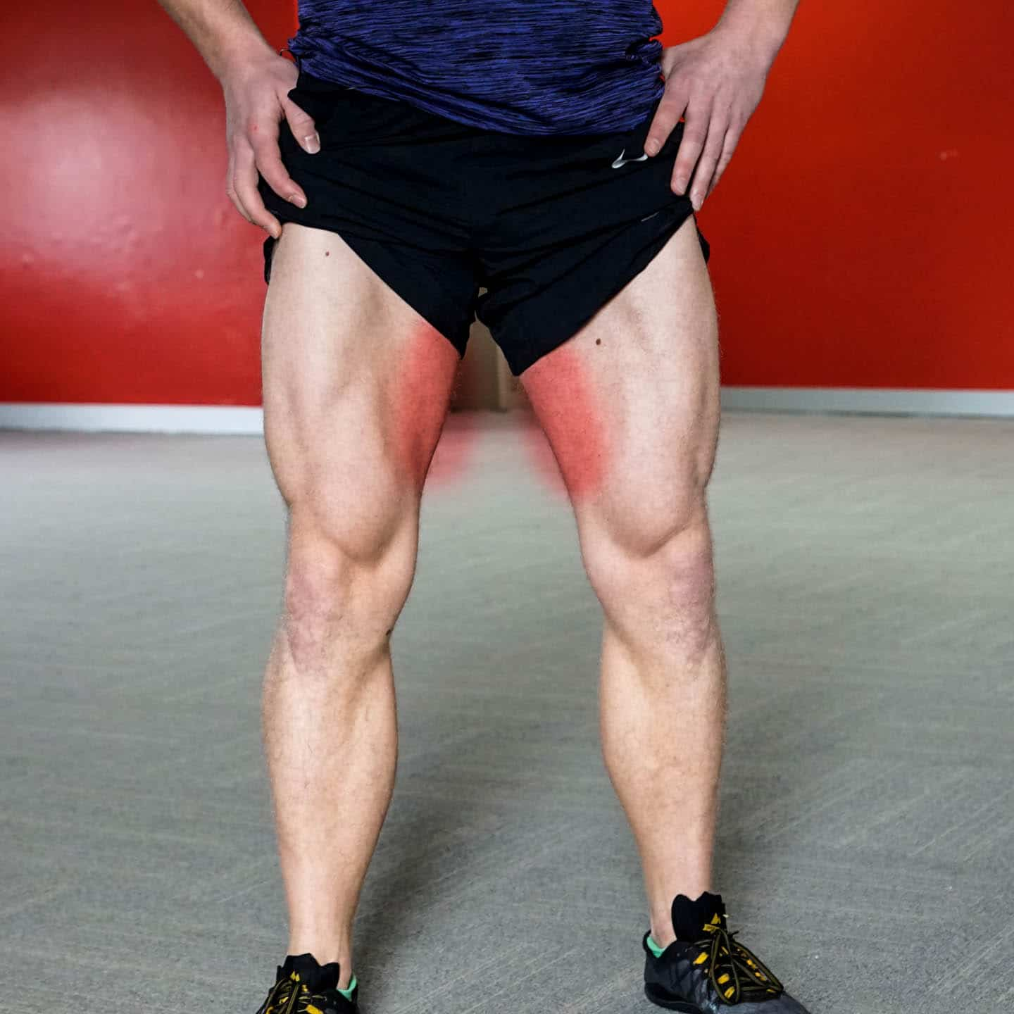 adductors inner thighs